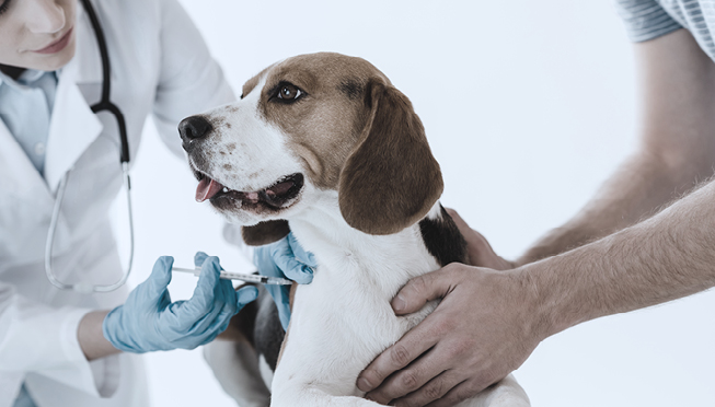 Pet vaccines: which vaccinations are necessary for your dog or cat?
